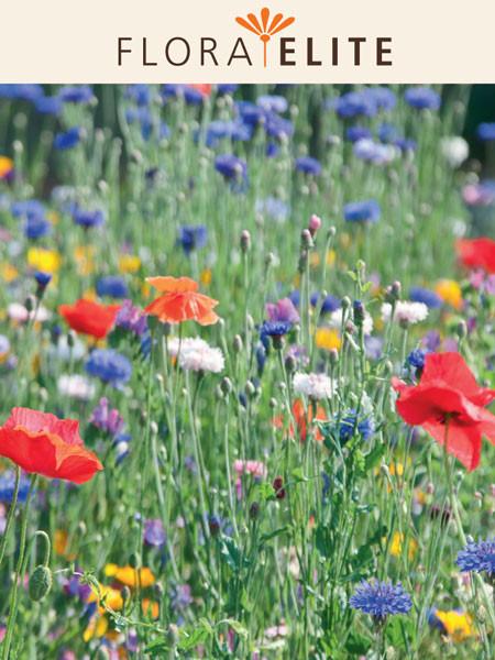 Wildblumenmischung (Best.-Nr. 23250)