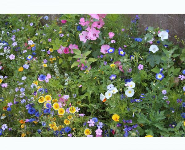 Blumenwiese - Wehretaler Sommertraum